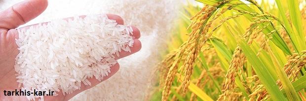 ترخیص کار برنج