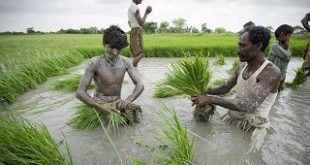 هزینه ترخیص برنج